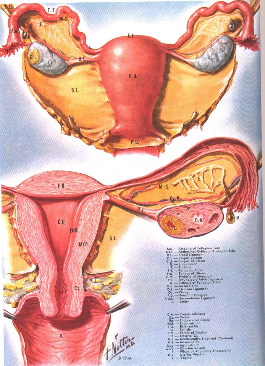 Basics Of Natural Family Planning